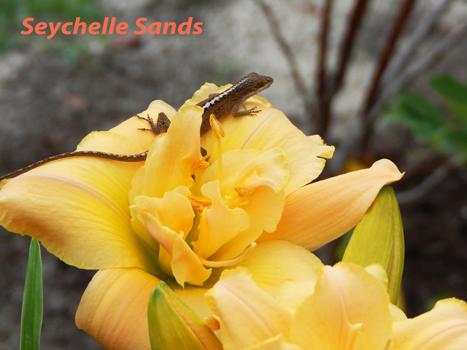 1A-Seychelle Sands 9 June 16 DSCN3583