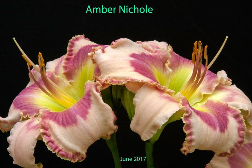 Amber Nichole 29 Jun 17 IMG_5350