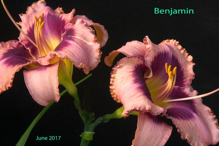 Benjamin 14 Jun 17 IMG_5199