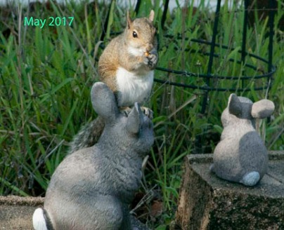 Garden Visitor Rabbit IMG_4975