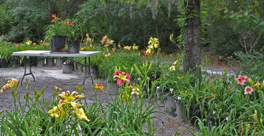 June Garden 280x540 IMG_3753