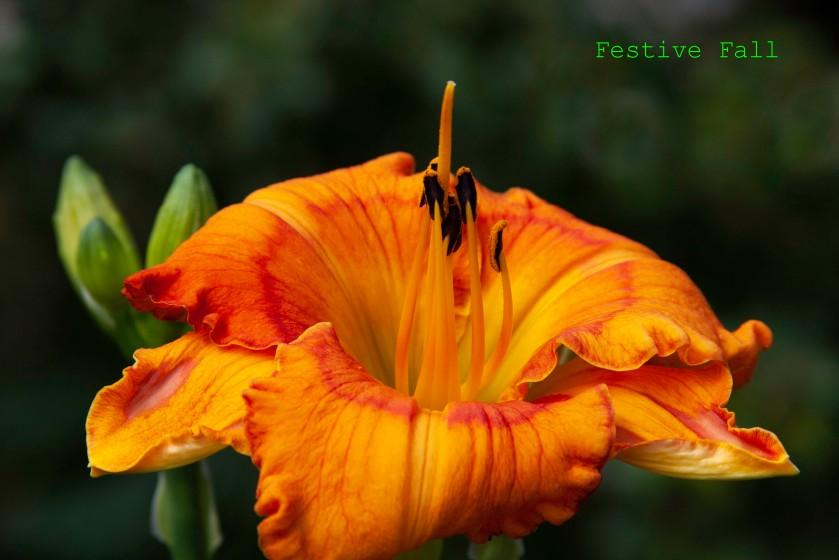 Festive Fall IMG_6183