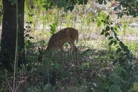 Deer10 IMG_2169