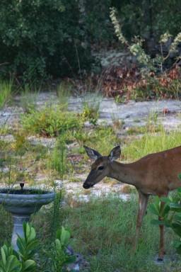 Deer9 IMG_1030