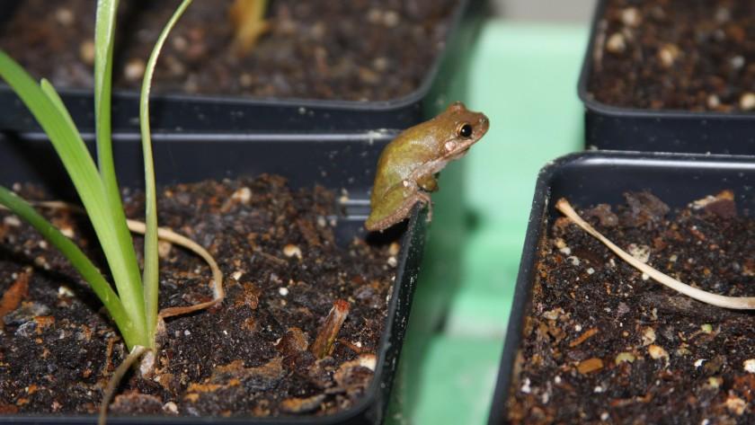 Frog 18 Feb 19 IMG_7864
