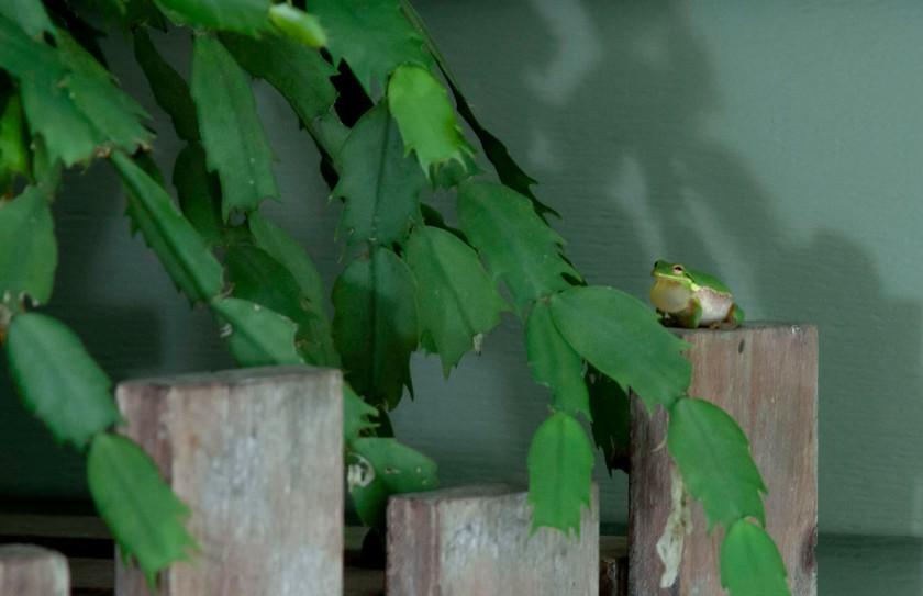 Frog5 IMG_6853