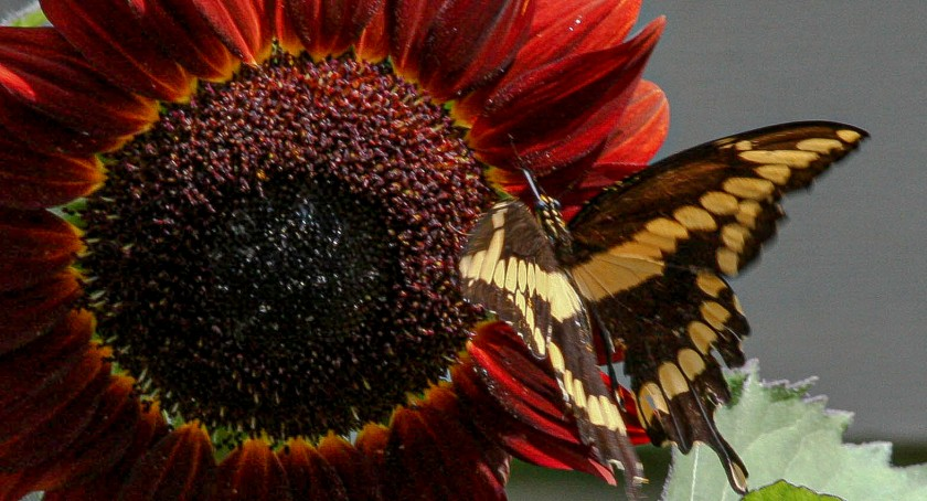 Garden Visitor 9b- 8 June 18 IMG_7092-2